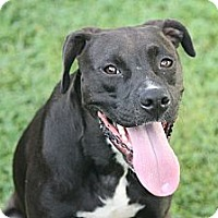 Adopt A Pet :: Jessie - ARDEN, NC