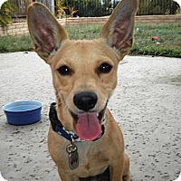 Adopt A Pet :: Tyke - Lake Elsinore, CA