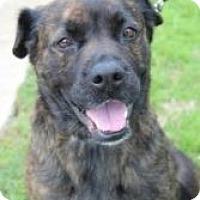 Adopt A Pet :: Hannah - Justin, TX