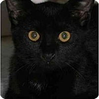 Adopt A Pet :: Felix - Bristol, RI