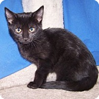 Adopt A Pet :: K-Twinkle6-Veronica - Colorado Springs, CO