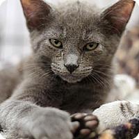 Adopt A Pet :: Hercules - Sacramento, CA
