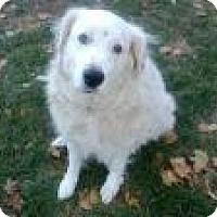 Adopt A Pet :: Leo - Courtesy Post - Ascutney, VT