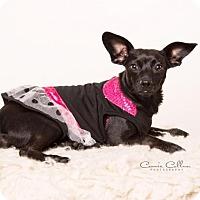 Adopt A Pet :: Jetta - Birmingham, AL