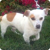Adopt A Pet :: Petey - Redondo Beach, CA