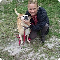 Adopt A Pet :: Annie - Williston, FL