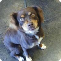 Adopt A Pet :: Betty - Alpharetta, GA