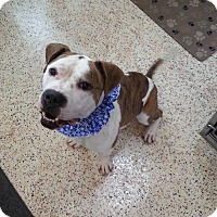 Adopt A Pet :: Buster - Garden City, MI