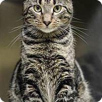 Adopt A Pet :: Jack - Johnstown, PA