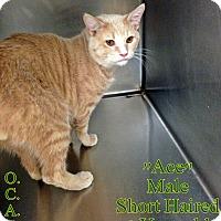 Adopt A Pet :: T-7 Ace - Triadelphia, WV