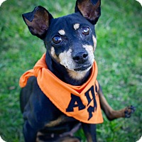 Adopt A Pet :: Maisie - Rancho Santa Fe, CA