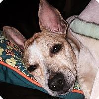 Adopt A Pet :: Camper - Windermere, FL