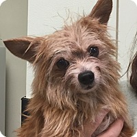 Adopt A Pet :: Bubby - Orlando, FL
