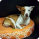 Adopt A Pet :: Copper