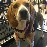 Adopt A Pet :: Grace 1 in CT - Manchester, CT