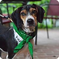 Adopt A Pet :: Rusty - Baton Rouge, LA