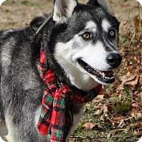 Adopt A Pet :: Olivia - Erwin, TN