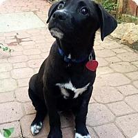 Adopt A Pet :: Pedro - Adopted! - San Diego, CA