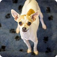 Adopt A Pet :: Dianne - Berkeley, CA