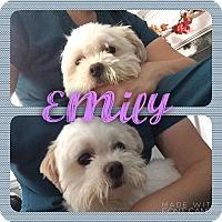 Adopt A Pet :: Emily - Garden City, MI
