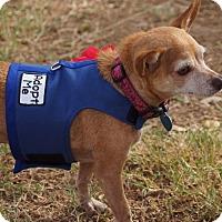 Adopt A Pet :: Rain - AUSTIN, TX