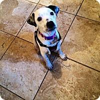 Adopt A Pet :: daisy - North Brunswick, NJ