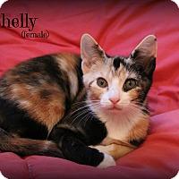 Adopt A Pet :: Shelly - Glen Mills, PA