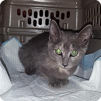 Adopt A Pet :: Gianna - Old Bridge, NJ