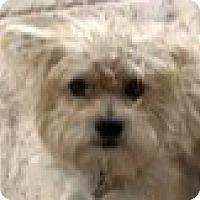 Adopt A Pet :: Toby-ADOPTION PENDING - Boulder, CO