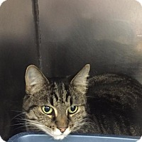 Adopt A Pet :: NEENA - Fall River, MA