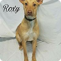 Adopt A Pet :: Roxy - Grand Bay, AL