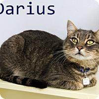 Adopt A Pet :: Darius - Hamilton, MT