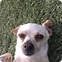 Adopt A Pet :: Billie - Chula Vista, CA