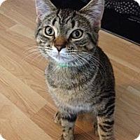 Adopt A Pet :: McKinlee - Byron Center, MI