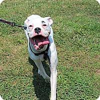 Adopt A Pet :: Sebastian - Allentown, PA