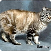 Adopt A Pet :: Sammy - Portland, OR