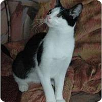 Adopt A Pet :: Licorice - Chula Vista, CA