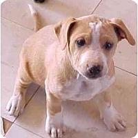 Adopt A Pet :: Conan - Sierra Vista, AZ