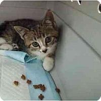 Adopt A Pet :: Cupcake - Oakland Park, FL
