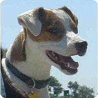 Adopt A Pet :: MOJO - Phoenix, AZ
