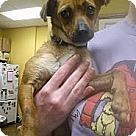 Adopt A Pet :: Leroy Moon