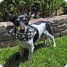 Adopt A Pet :: Daphney