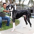Adopt A Pet :: Moose