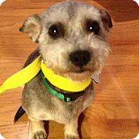 Adopt A Pet :: Slater - Redondo Beach, CA