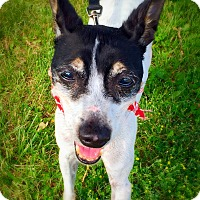 Adopt A Pet :: Pepper - Green Bay, WI