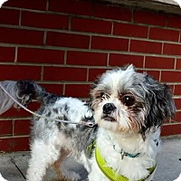 Adopt A Pet :: Wrangler - Chicago, IL
