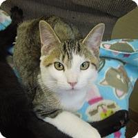 Adopt A Pet :: Emerald - Medina, OH