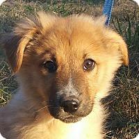 Adopt A Pet :: Zeven - Staunton, VA