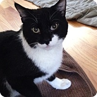 Adopt A Pet :: Jinx - Sherman Oaks, CA