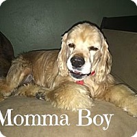 Adopt A Pet :: Momma Boy - Scottsdale, AZ